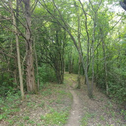 The winding trail in the woods of Afton State Park