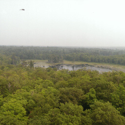 The smoky wilderness of Itasca State Park from the top of the fire tower