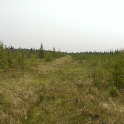 Looking east at the bog