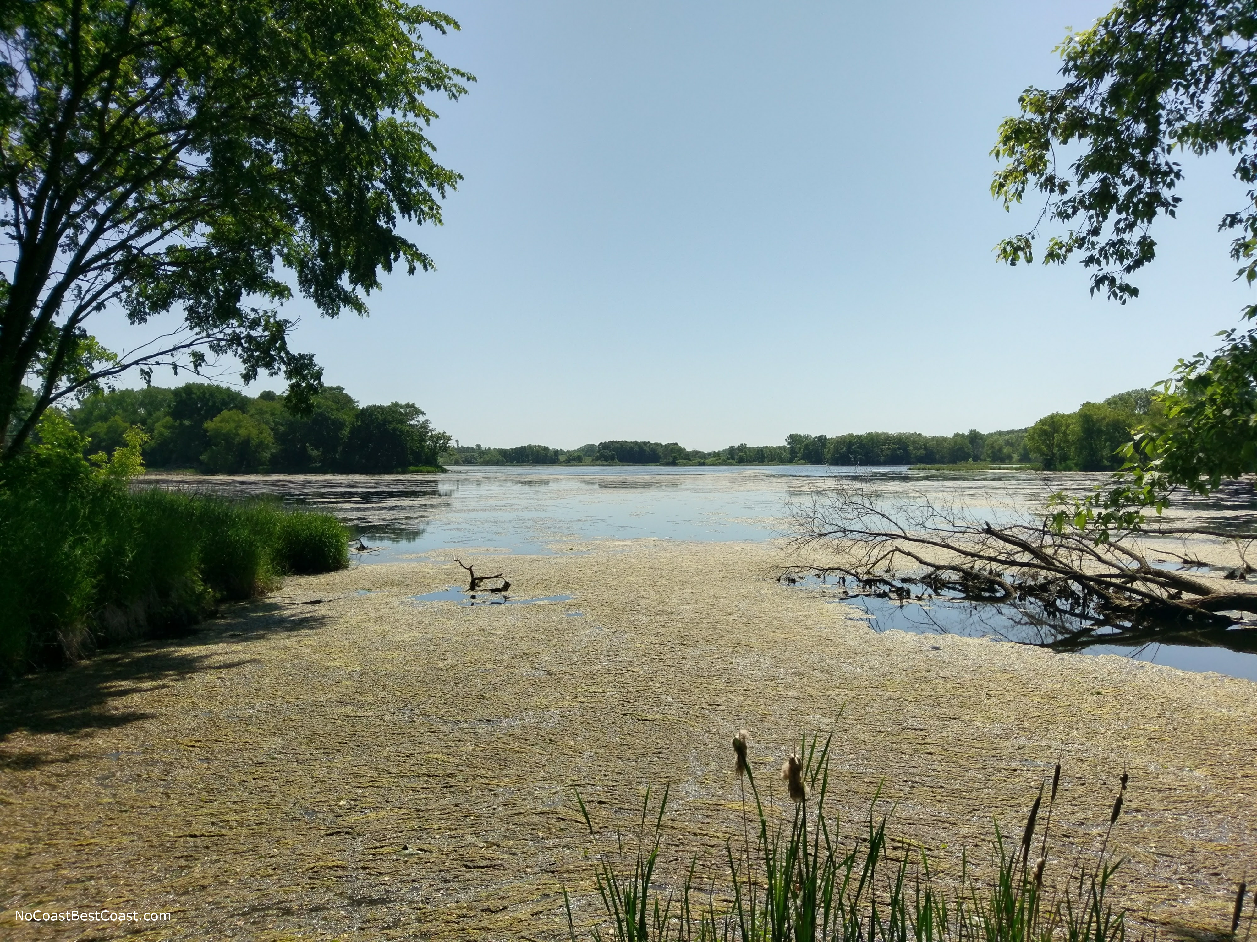 A yellow algae bloom adding more color to one of the pretty lakes in Carver Park Reserve
