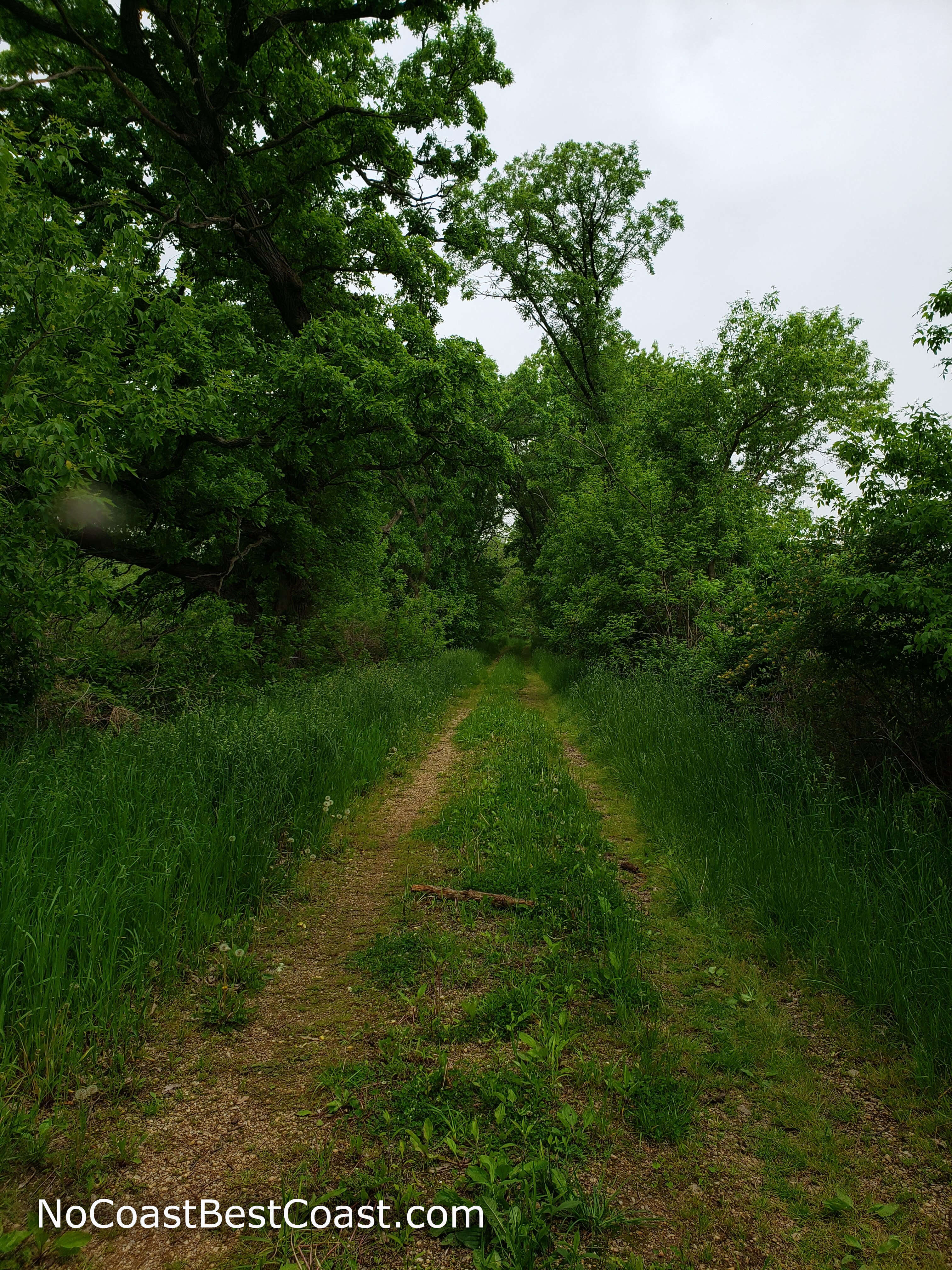The overgrown old road that serves as a trail