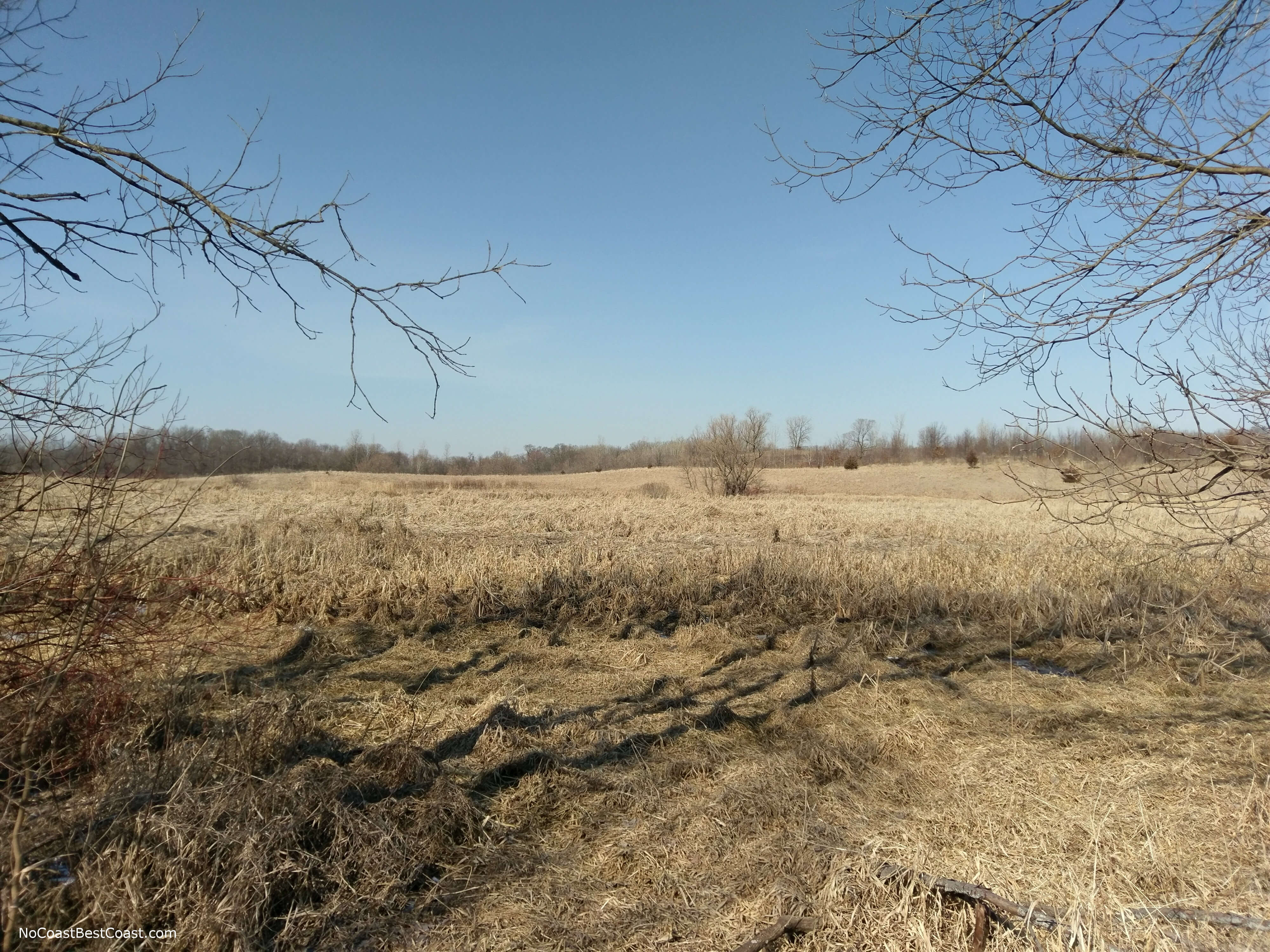 A sunny prairie in Elm Creek Park Reserve during early spring