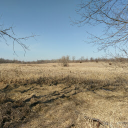The grasslands of Elm Creek Park Reserve on a sunny day in March.