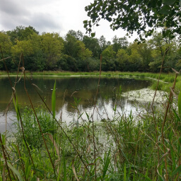 A picturesque pond on the side of the Hill Trail