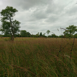 This restored prairie will provide yet another type of landscape to your trip