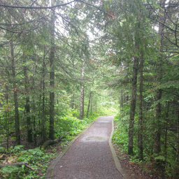 The Mountain Portage Trail cutting through the pine forest