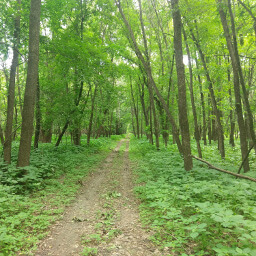 A glimpse of the dense, green forest located within the center of a major metropolitan area