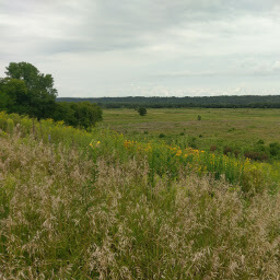 Overlooking the bison enclosure from near Seppmann Mill
