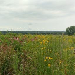 The pretty prairie flowers adjacent to the trail
