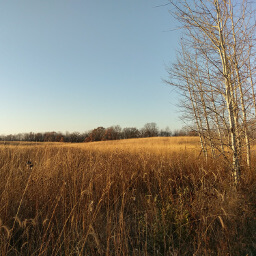 The restored prairie is the best part of this hike