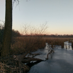 The creek merges with the wetlands of Minnregs Lake