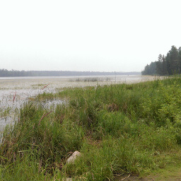 Looking out on Lake Itasca from the Headwaters of the Mississippi River
