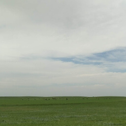 Way off in the distance you can see the black dots of bison roaming the plains