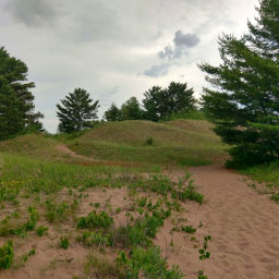 Grassy dunes and pines form the unique landscape on Park Point