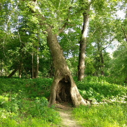 One of the many giant trees with fun nooks