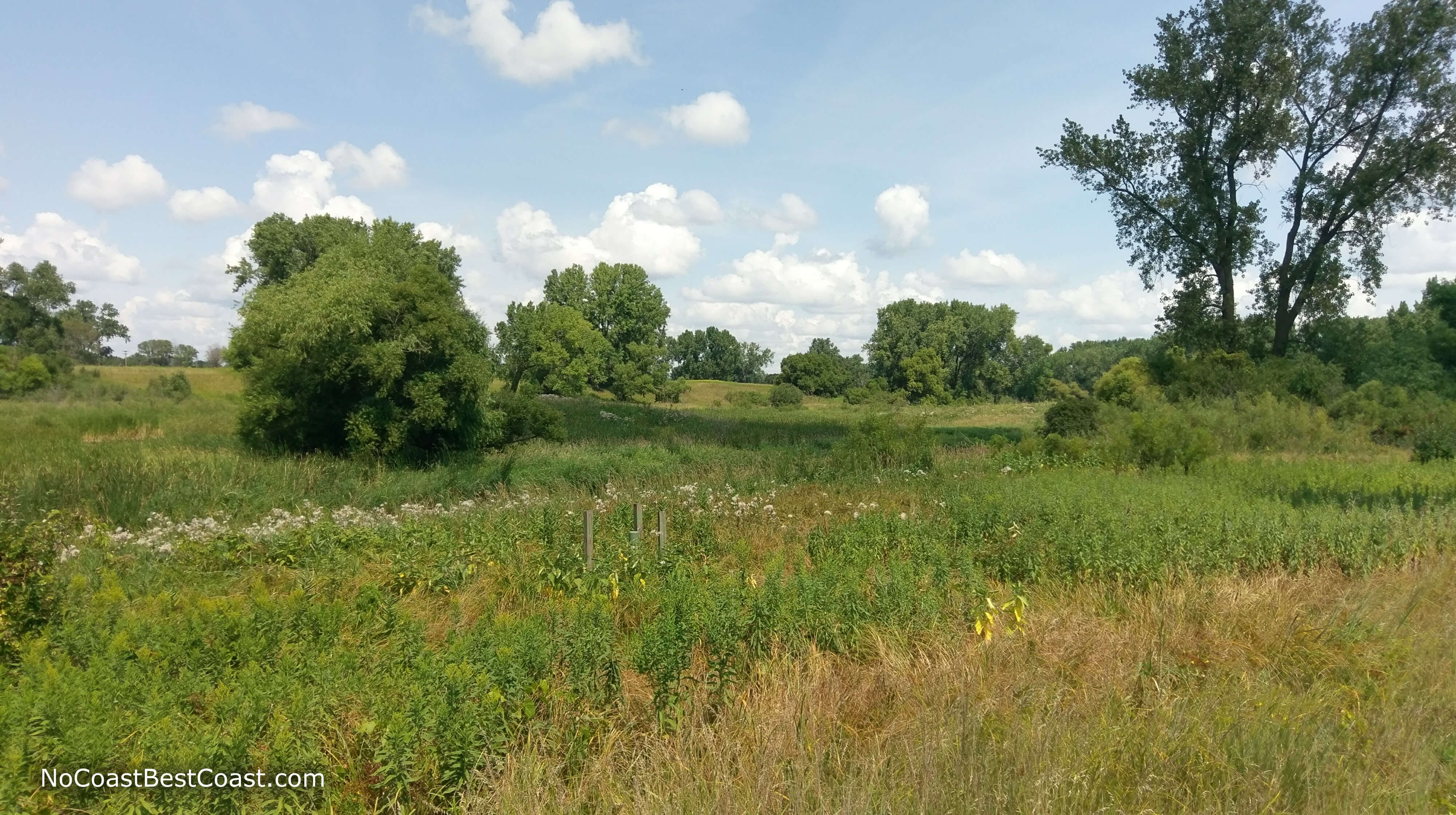 Trees and wildflowers dot the prairie landscape along the Rice Creek North Regional Trail